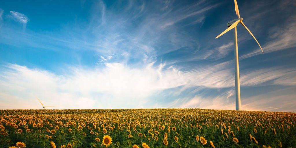 Sun flowers and wind turbine